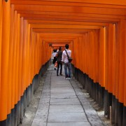 Thousands of torii.