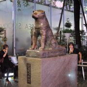 Hachiko the loyal dog at Shibuya.